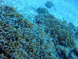 スリン島,世界のきれいな海, テント宿,シュノーケリング