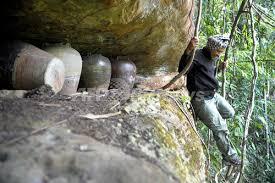 カンボジアのジャングルで遺骨発見