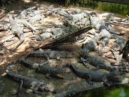 クロコダイルの池