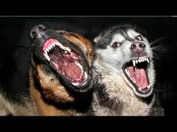 海外旅行では狂犬病に要注意