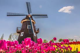 オランダで海外勤務