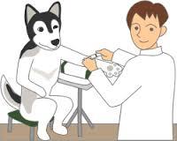 狂犬病の予防接種は発症する前に