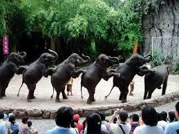 バンコクのサファリワールドで動物たちに癒されタイ