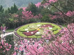 春に訪れるべき台湾のパワースポット陽明山