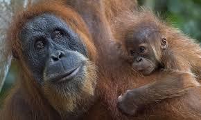インドネシアの自然遺産に生息する動物たち