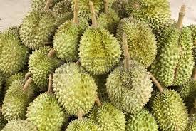 フルーツの王様ドリアンには品種がいっぱい