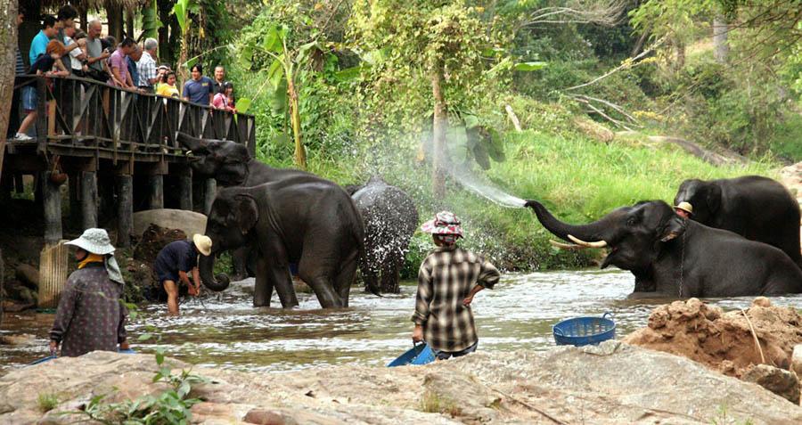 タイのチェンマイ観光ガイド ⑧ 動物たちとの触れ合い