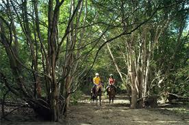 バリ島で乗馬を楽しむ