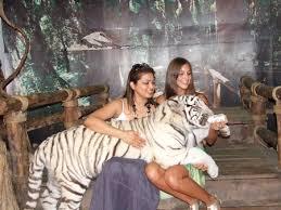 チェンマイ・ナイト・サファリで人気のホワイト・タイガー
