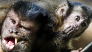 狂犬病は哺乳動物から感染