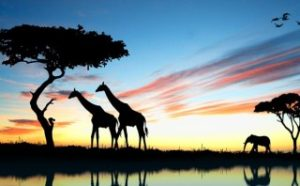 ケニアマサイマラで自然とマサイ族を満喫する旅行ツアー