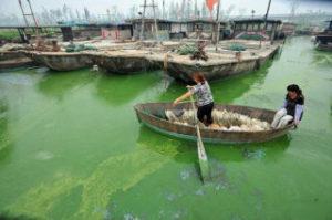 環境汚染が酷すぎる中国の養殖用湖
