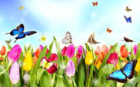「常春」で一年中過ごしやすい快適な国・地域は?