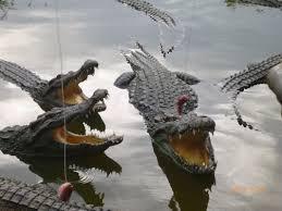 ベトナム・ニャチャンでワニを釣り、ワニを食し、泥温泉でまったりと…