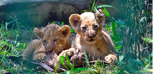 バリ島の動物園 (サファリ) & 美術館 【まとめ】