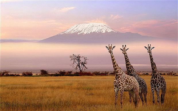 ケニアの基本情報 & 人気観光スポット